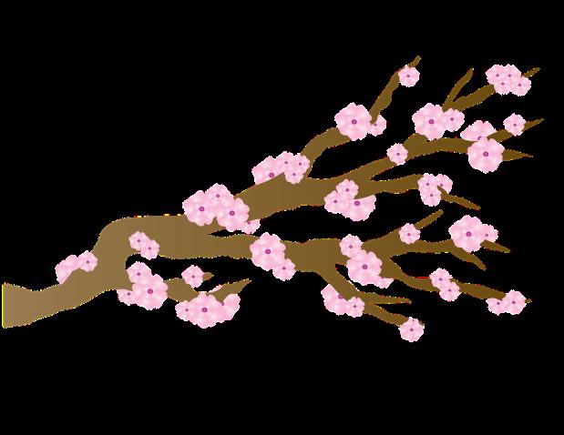 cerezo-en-flor