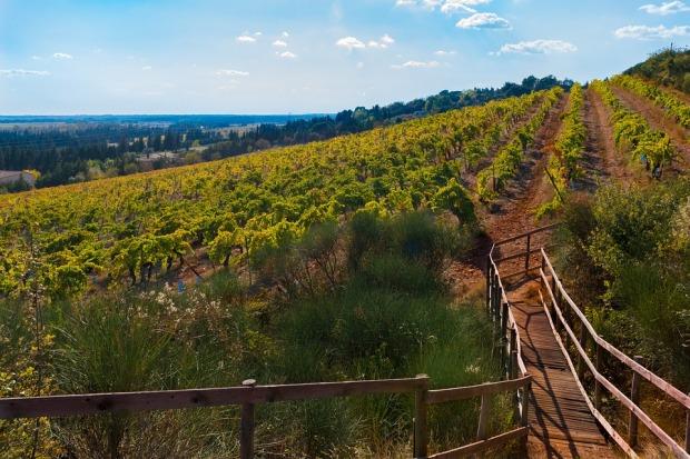 vines-2902591_960_720
