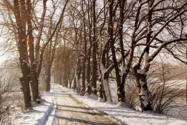 paisaje-invernal_2911611